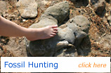 Fossil Hunting on the Isle of Wight